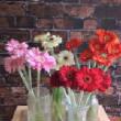 floralgallery/gerbera.jpg